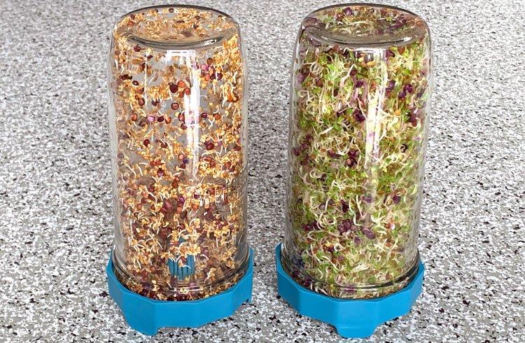 graines-germees-etapes-germination